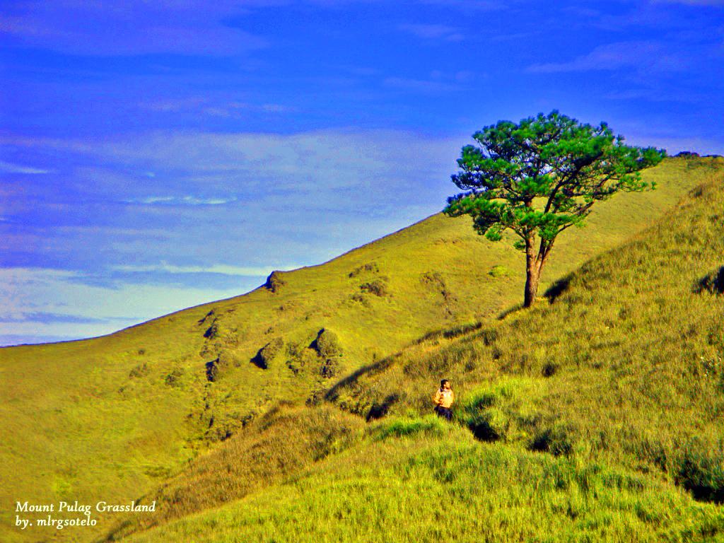 The grassland.