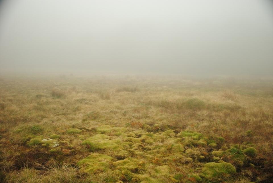 Foggy Lake Incolos