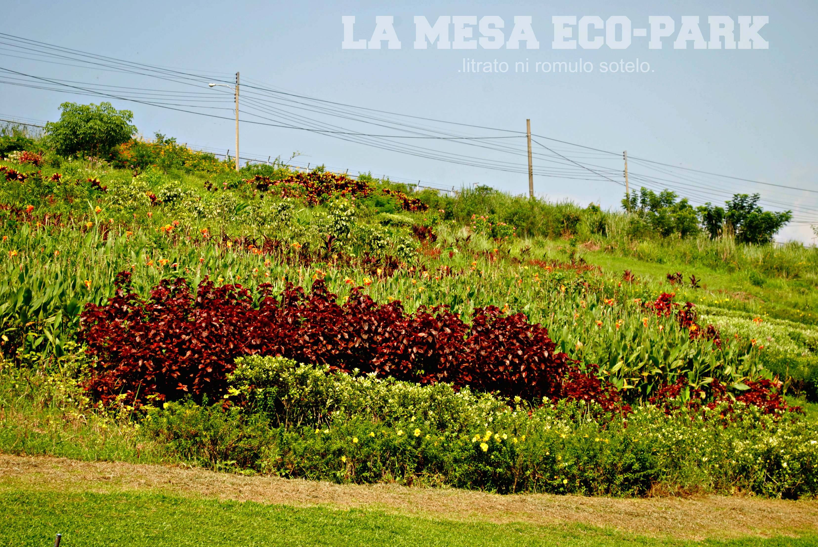 La mesa eco park quezon city ph no juan is an island - La mesa eco park swimming pool photos ...