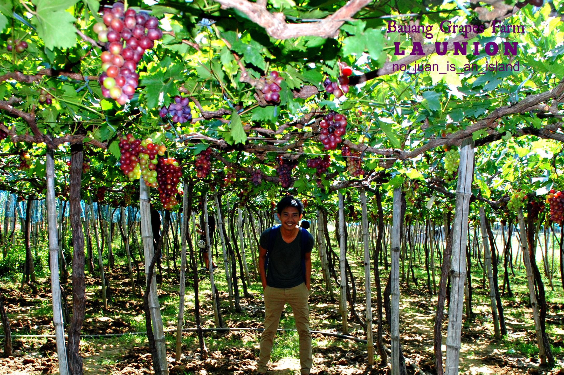 Bauang Grapes Farm (La Union, PH) | No Juan Is An Island